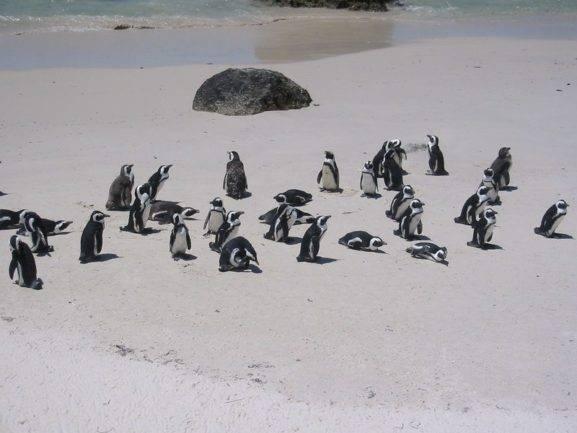 Google vous invite à découvrir la mise à jour de son algorithme Pingouin