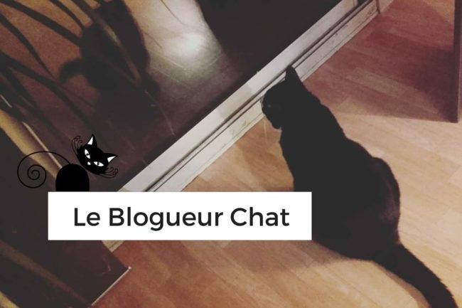 Les chats et le blogueur, une histoire qui me va bien