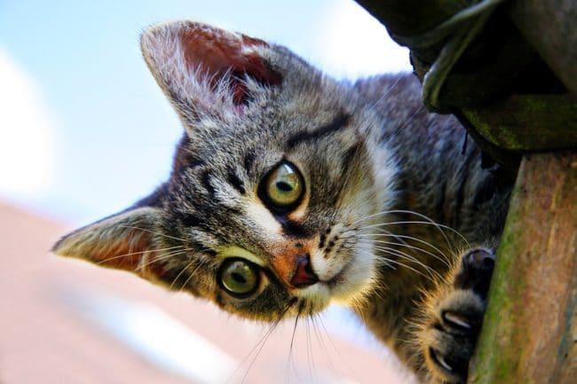 petit chaton malicieux trouvé sur pixabay